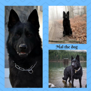 mal-the-dog